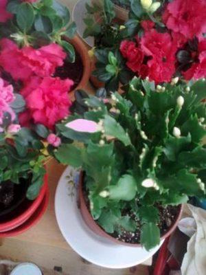 1-flori-ghivece-balcon-image10190