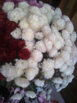 super-crizantemeimage14247