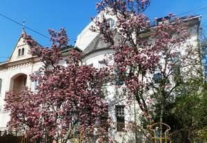 1 blog magnolie CN8952