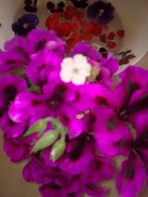 din balcon buchete pt cititorii blogului meu albă floricicăImage1799
