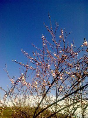 cer flori Image15081