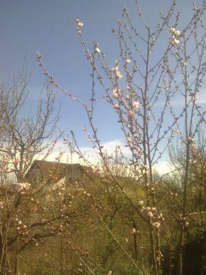 de florii Image15080