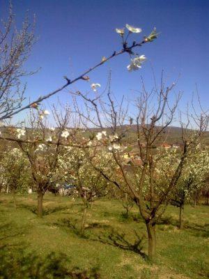 grădină adela Image15098