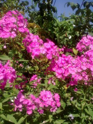 flori roz j Image3029