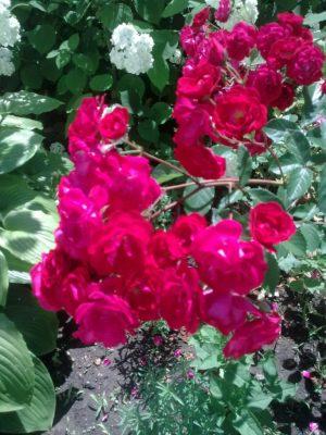 super flori