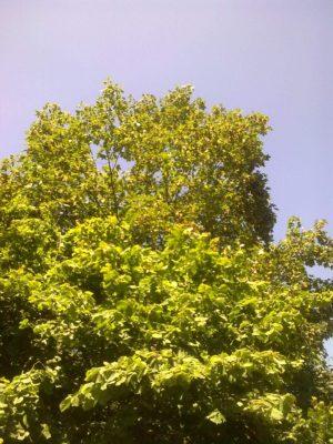 copac spre cer jn