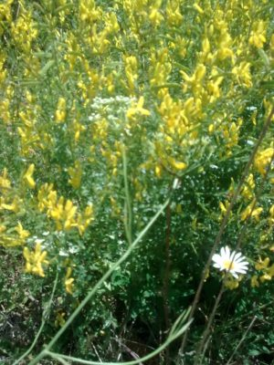flori galbene foto jeniţa naidin