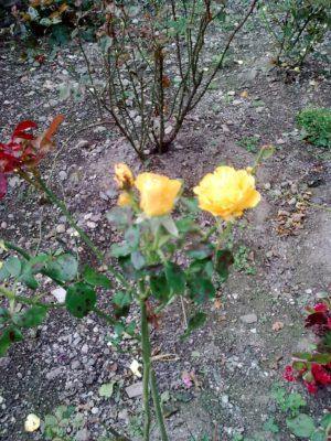 super flori galbene foto jeniţa naidin