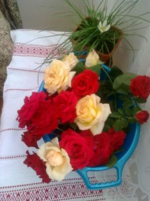 flori în apartament jeniţa naidin